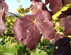 plquette_feuilles-jaunies_rouge